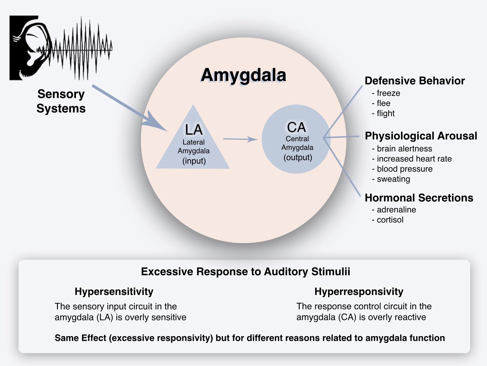 Misophonia Research - LeDoux Lab, NYU   Misophonia International